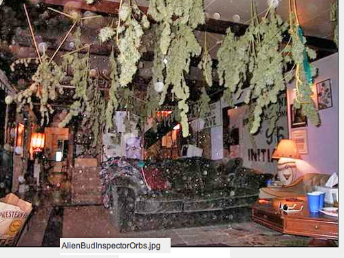 Marijuana drying in the front room